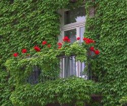 Озеленение балконов: от интерьера до цветов